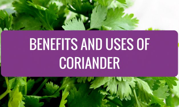 Benefits and Uses of Coriander